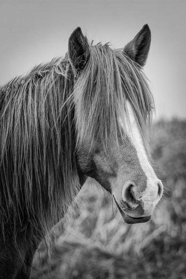 2015 Photograph - Pony Portrait  by Nathaniel Kidd