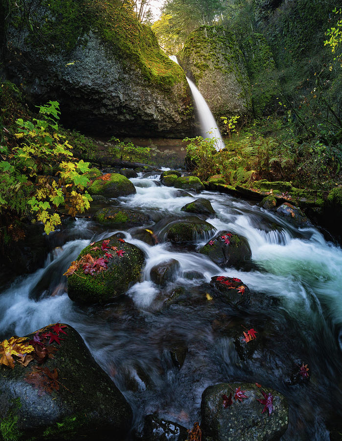 Autumn Leaf Photograph - Ponytail Falls With Autumn Foliage by William Freebilly photography