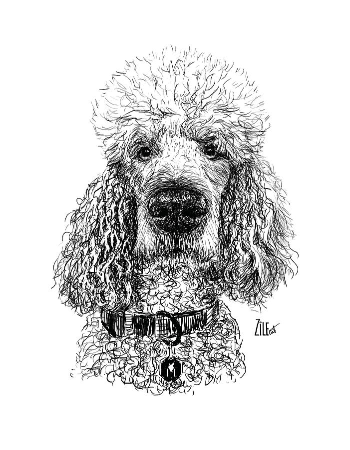 Dog Photograph - Poodle @standerdpoodle by ZileArt