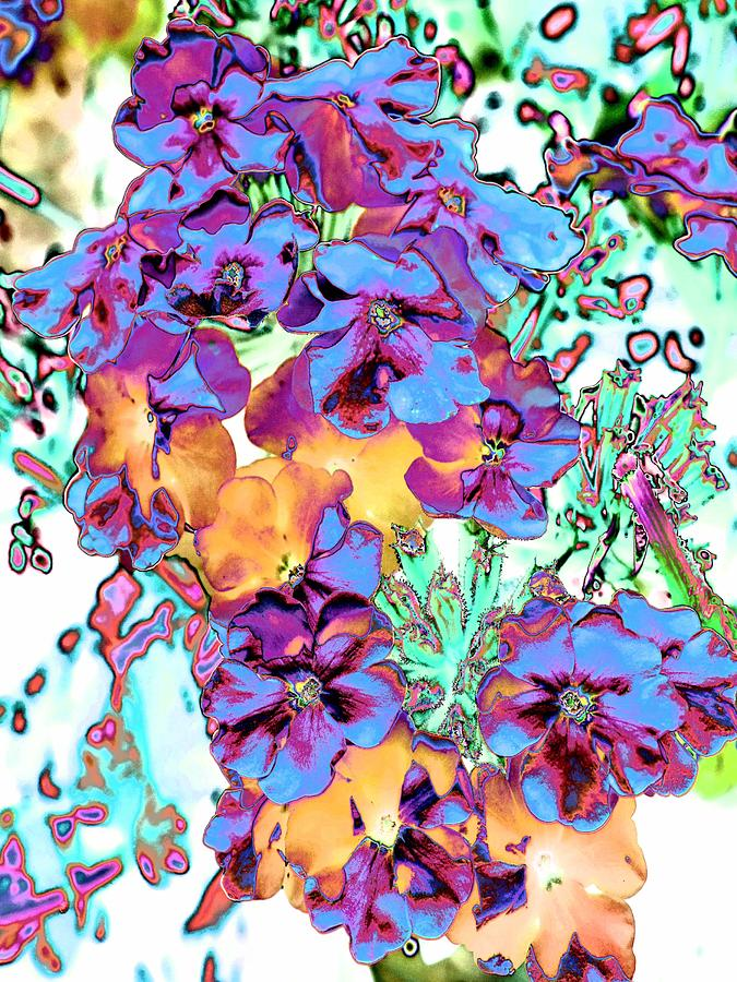 Abstract Photograph - Pop Art Pansies by Marianne Dow