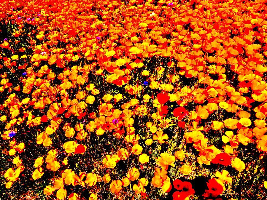Nikon Photograph - Pop-art Plants by Nik Watt