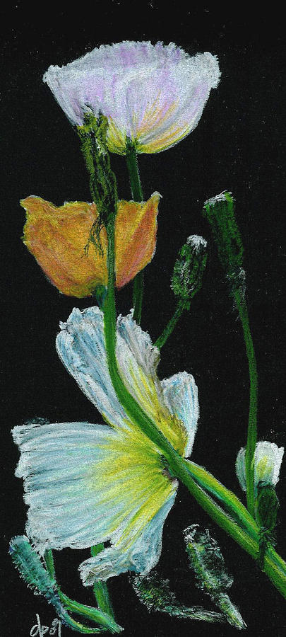 Poppies Pastel - Poppies 1 by Dana Patterson