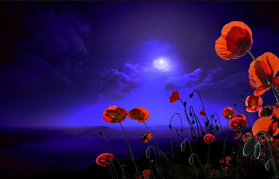 Red Photograph - Poppies Blue by Igor Zenin