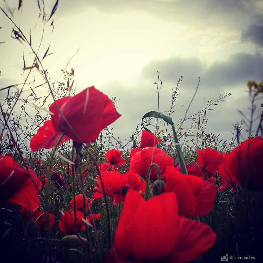 Poppies Photograph - Poppies field and Clouds by Miguel Angel