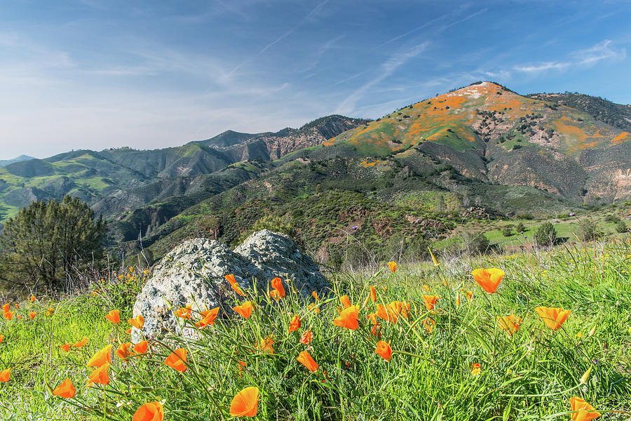 Poppies On The Mountain by Paul Johnson