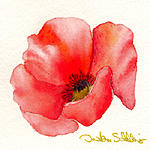 Poppy Painting by Dorothea Schilling