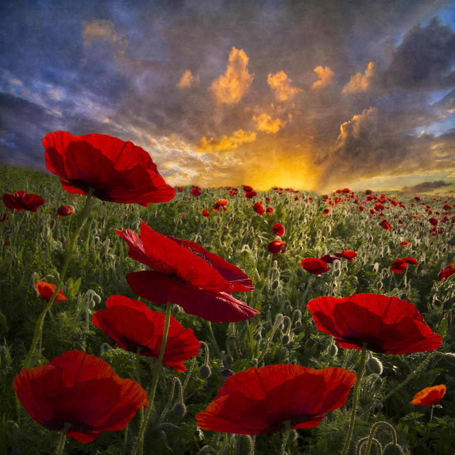Appalachia Photograph - Poppy Field by Debra and Dave Vanderlaan