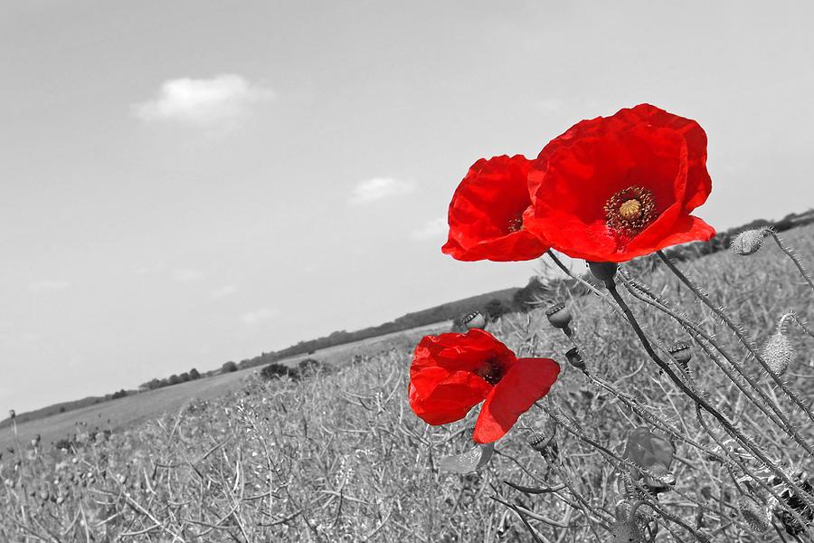 Poppy Fields 2 Black And White Photograph By Gill Billington