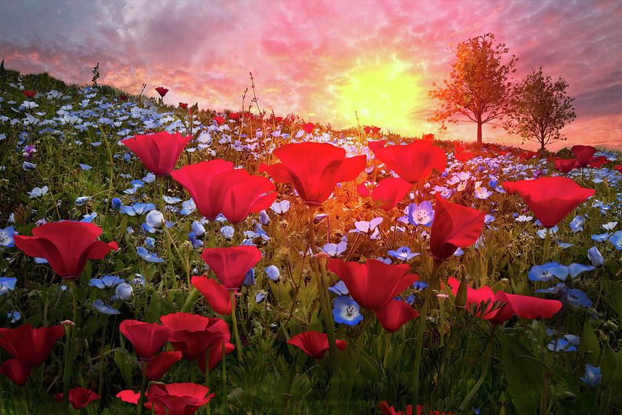Appalachia Photograph - Poppy Fields At Dawn by Debra and Dave Vanderlaan