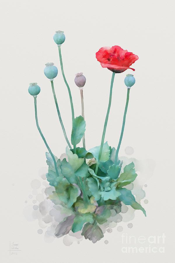 Poppy Painting - Poppy by Ivana Westin