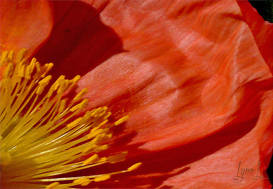 California Photograph - Poppy Love by S Lynn Lehman