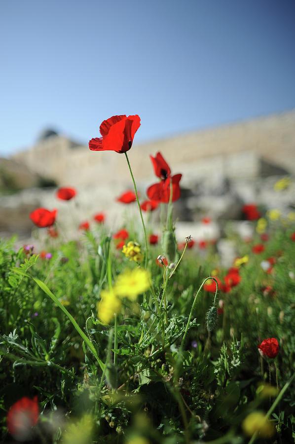 Flower Photograph - Red Poppy Flower On The Meadow by Maksym Kaharlytskyi