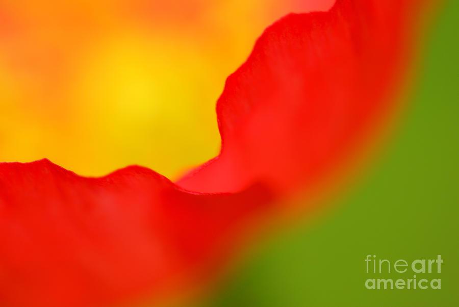 Poppy Photograph - Poppy by Silke Magino