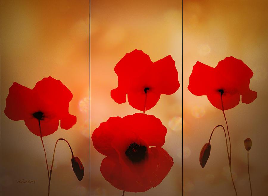 Poppies Digital Art - Poppy Triptych by Valerie Anne Kelly