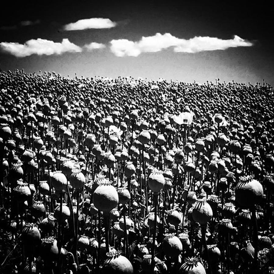 Poppyfields Photo By Photograph by Paul Dal Sasso