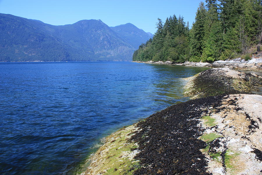 Porpoise Bay Photograph By Bc Scenery