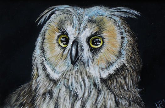 Owl Painting - Portait Owl by Uko Post