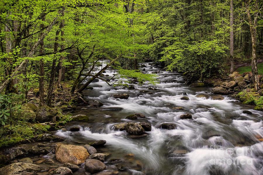 Stream Photograph - Porters Creek by Madonna Martin