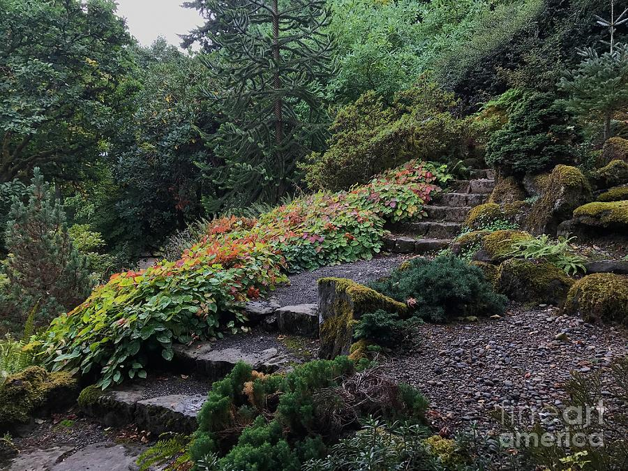 Autumn Garden by Charlene Mitchell
