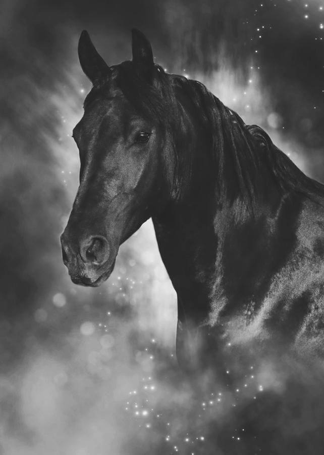 Horses photograph portrait of a black horse by wolf shadow photography