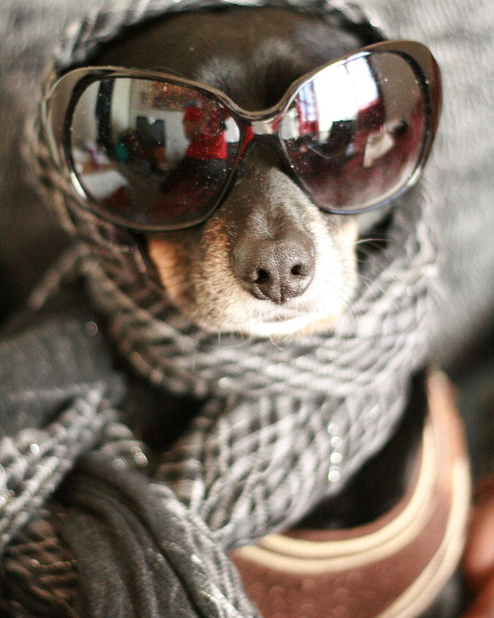Dog Photograph - Portrait Of A Diva by Aimee Galicia Torres