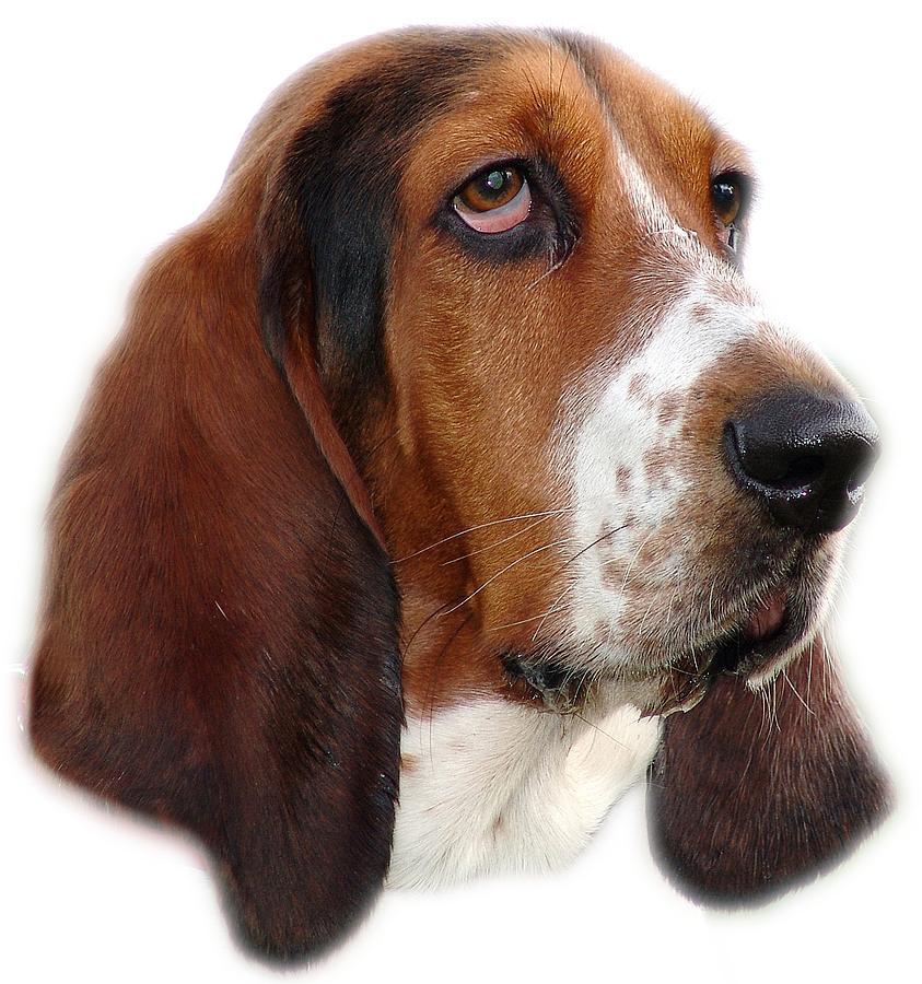 Portrait Photograph - Portrait Of A Dog by George Atsametakis