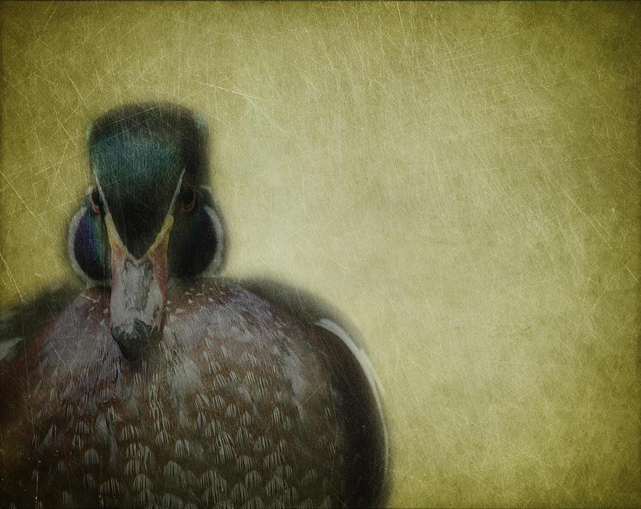 Duck Photograph - Portrait Of A Duck by Rebecca Cozart