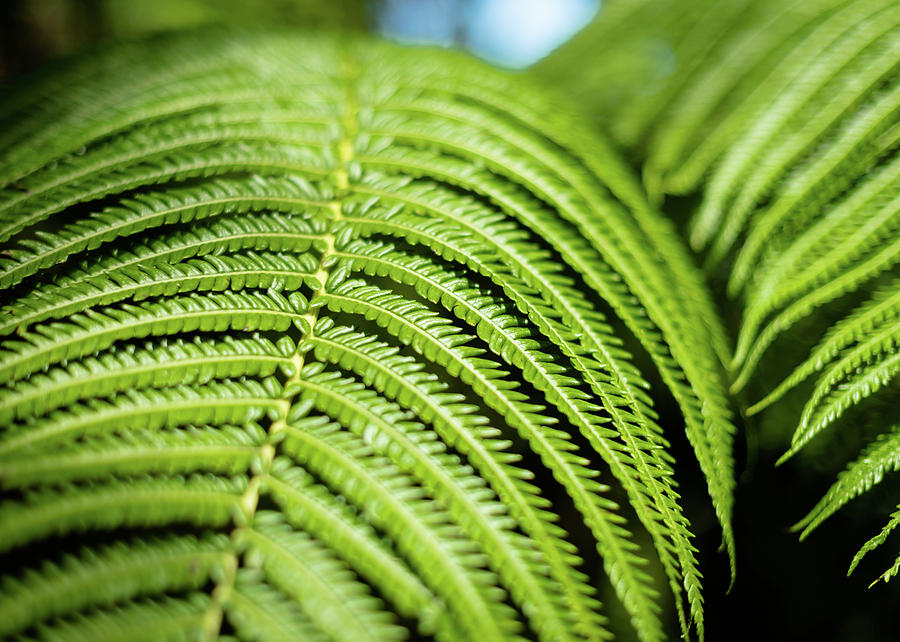 Portrait of a Fern by T Brian Jones