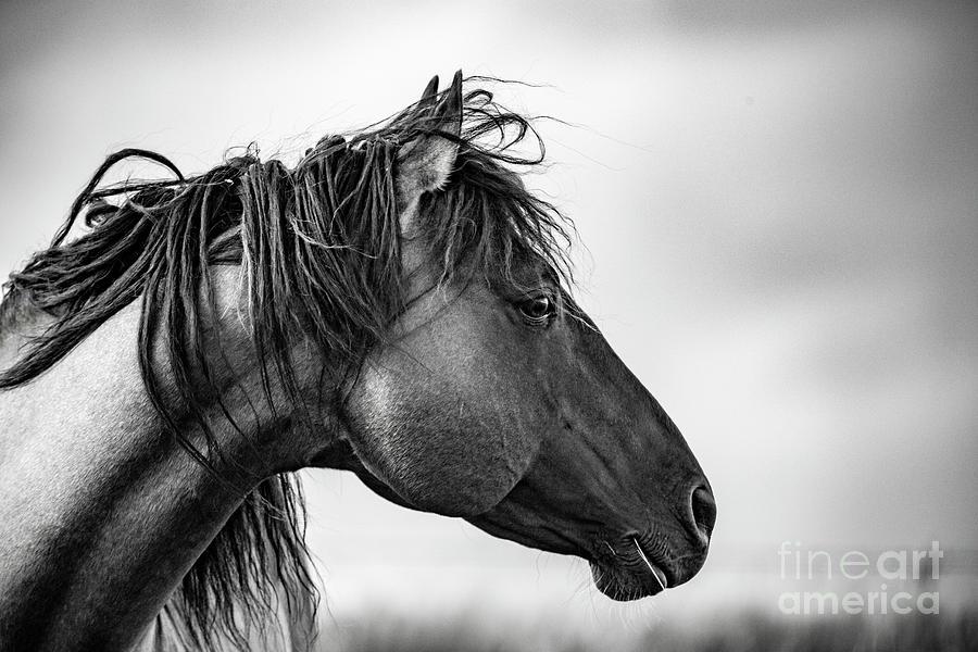 Portrait Of A Horse Photograph