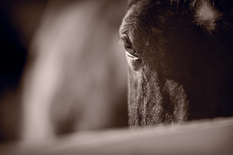 Horse Photograph - Portrait Of A Horse Kentucky by Steve Gadomski