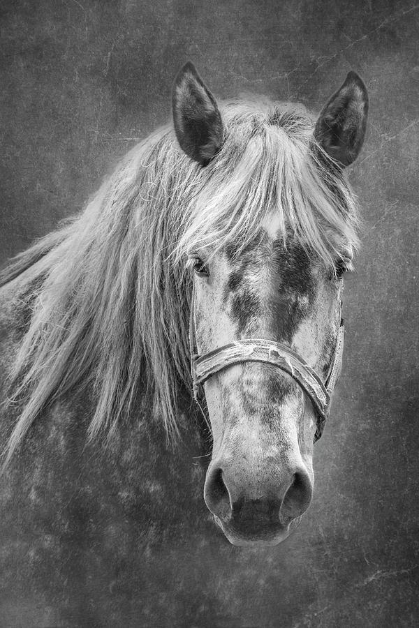 Animal Photograph - Portrait Of A Horse by Tom Mc Nemar