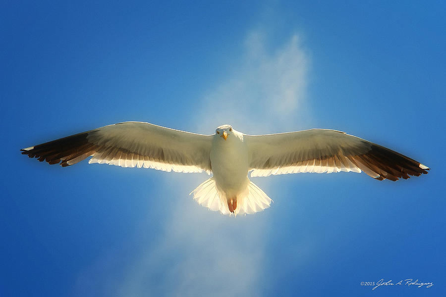 Seagull Photograph - Portrait Of A Seagull by John A Rodriguez
