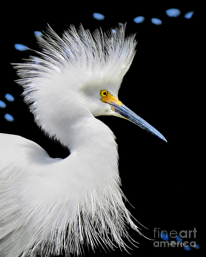 Snowy White Photograph - Portrait Of A Snowy White Egret by Jennie Breeze
