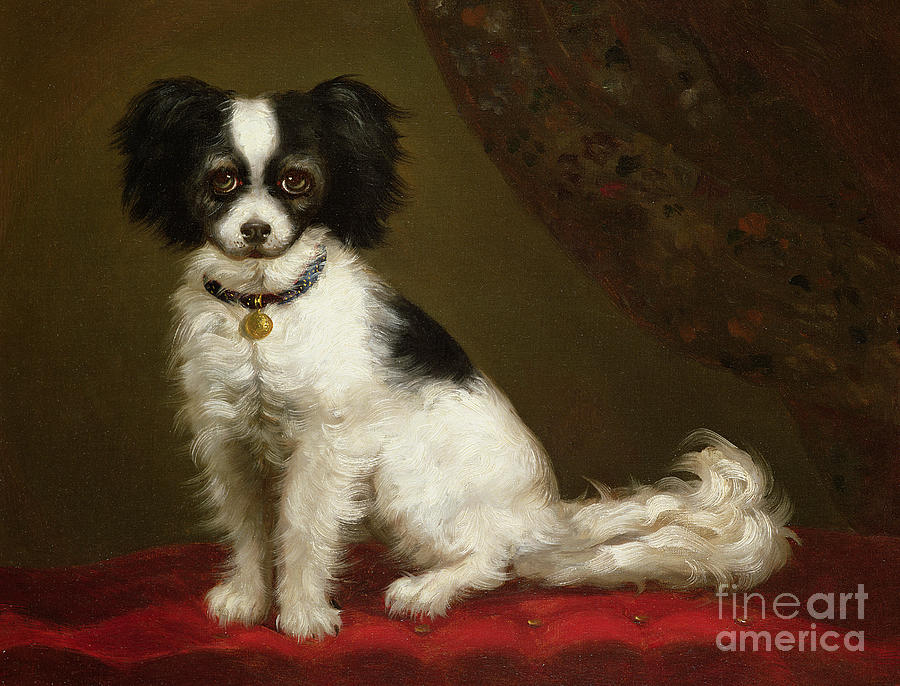 Portrait Of A Spaniel By Anonymous Painting - Portrait Of A Spaniel by Anonymous