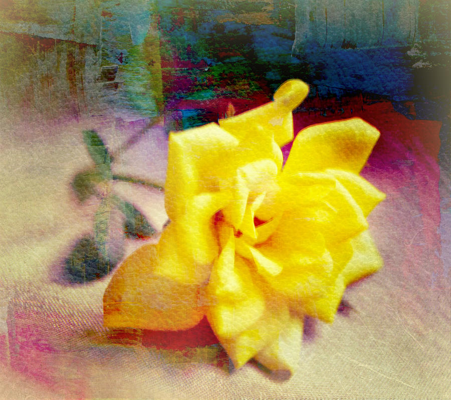 Portrait Of A Yellow Rose Photograph