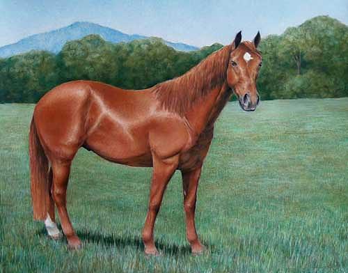 Horse Painting - Portrait Of Barley by Jenifer Trottier
