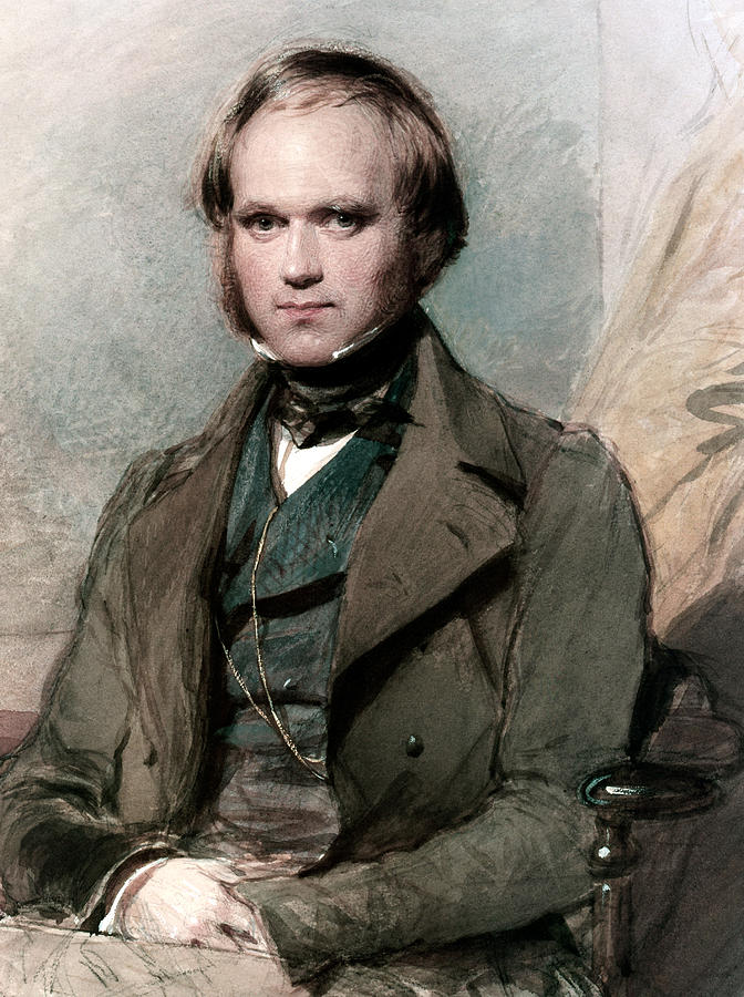 Portrait Of Charles Darwin Painting - Portrait Of Charles Darwin by George Richmond