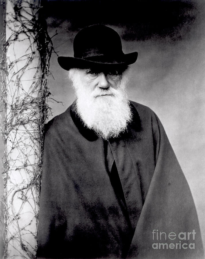 White Photograph - Portrait Of Charles Darwin by Julia Margaret Cameron