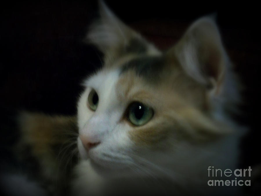 Cat Photograph - Portrait Of Miss Kitty by Emily Kelley
