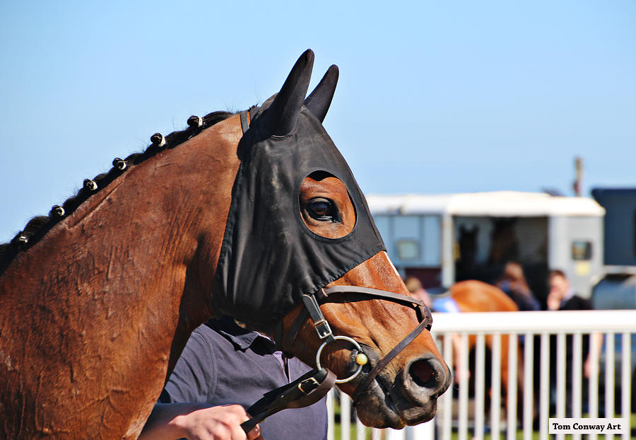 Horse Photograph - Portrait Of The Horse In The Hood by Tom Conway
