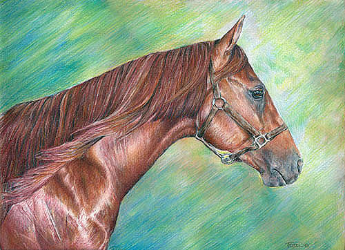 Horse Painting - Portrait Of Top Spinaker by Jenifer Trottier