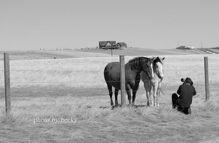 Horses Photograph - Posing by Becky Carpenter