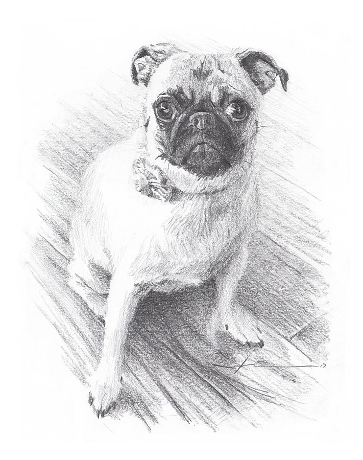 Posing Pug Drawing by Mike Theuer