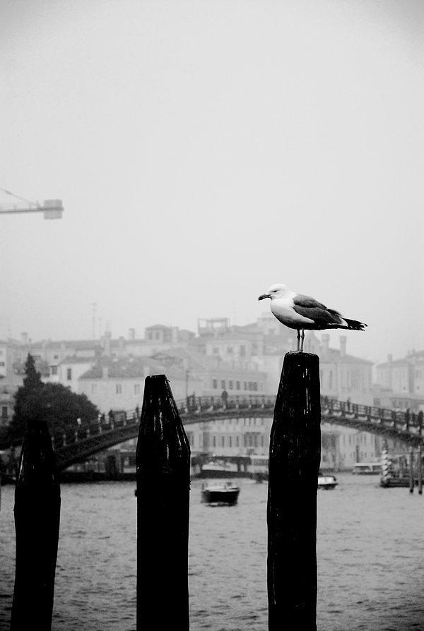 Bird Photograph - Posing by Sara Sami