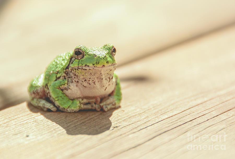 Posing Tree Frog by Cheryl Baxter