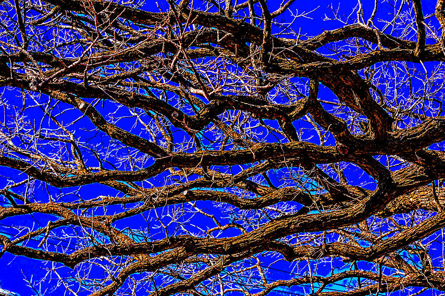Posterize Photograph - Posterized Tree Branches by Lonnie Paulson
