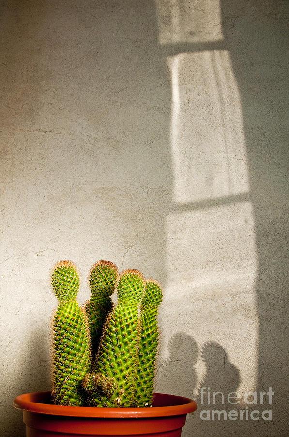 Cactus Photograph - Pot Of Cactus by Emilio Lovisa