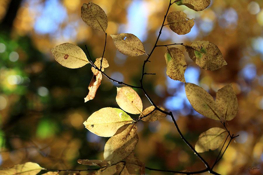 Autumn Photograph - Pot Of Gold II by Nancy  Coelho