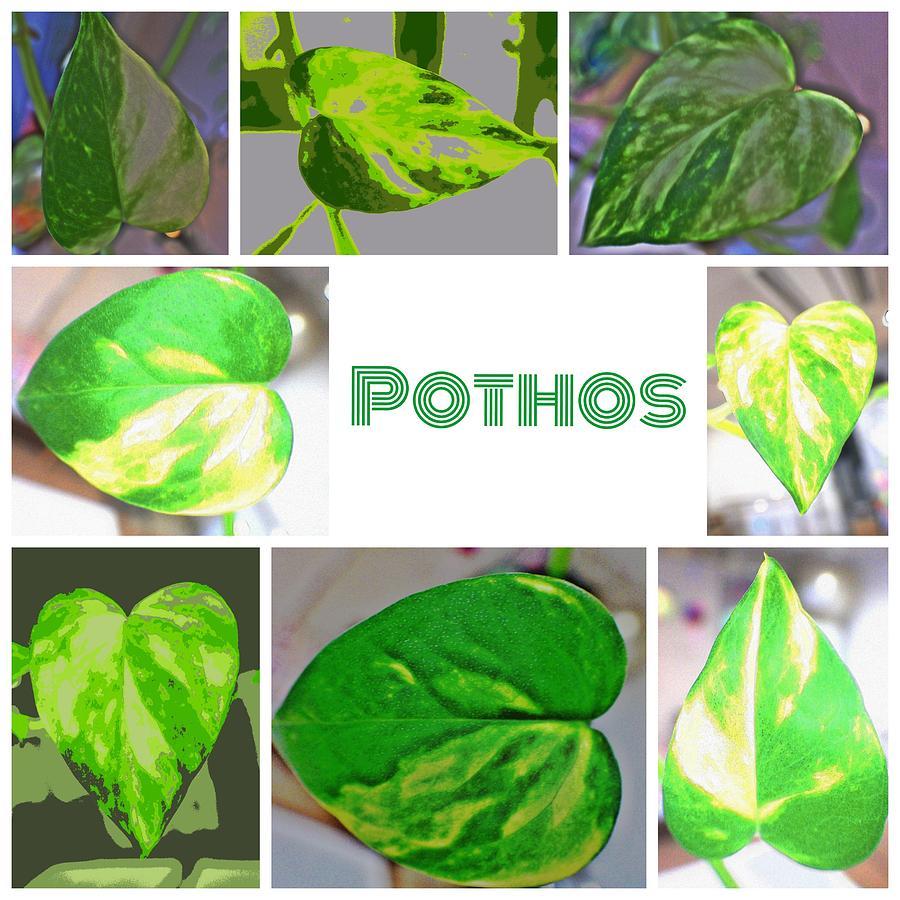 Pothos Digital Art - Pothos by Kumiko Izumi