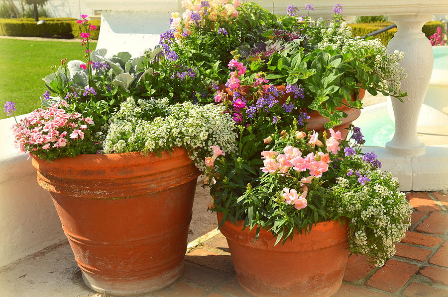 Potted Flowers & Potted Flowers Photograph by Linda Covino